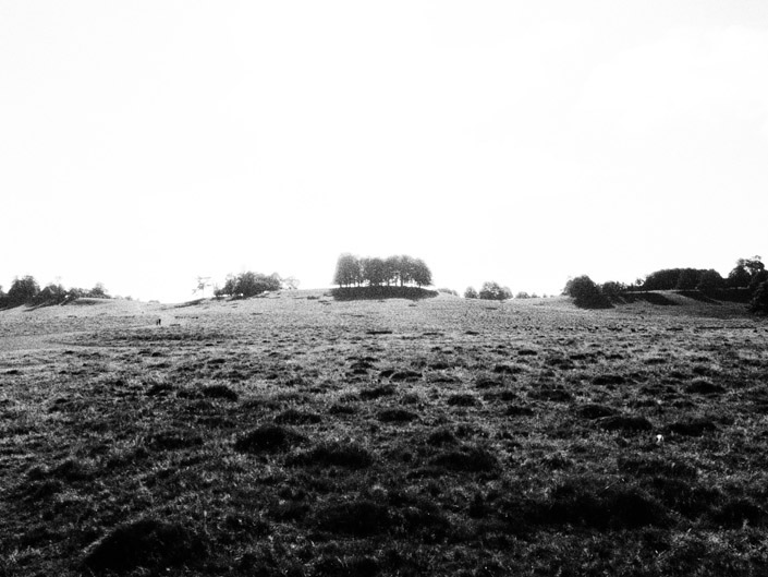 Petworth Park Stock Photography