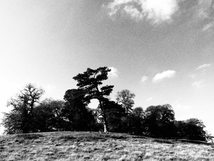 Petworth Park Stock Photography 2
