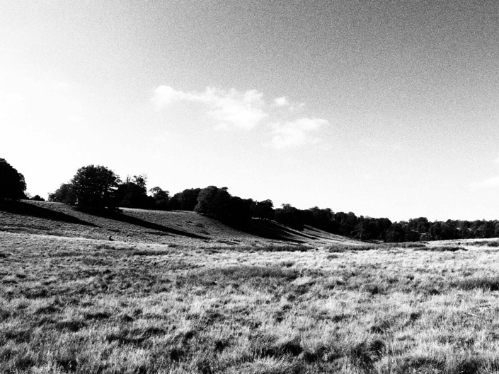 Petworth Park Stock Photography 4