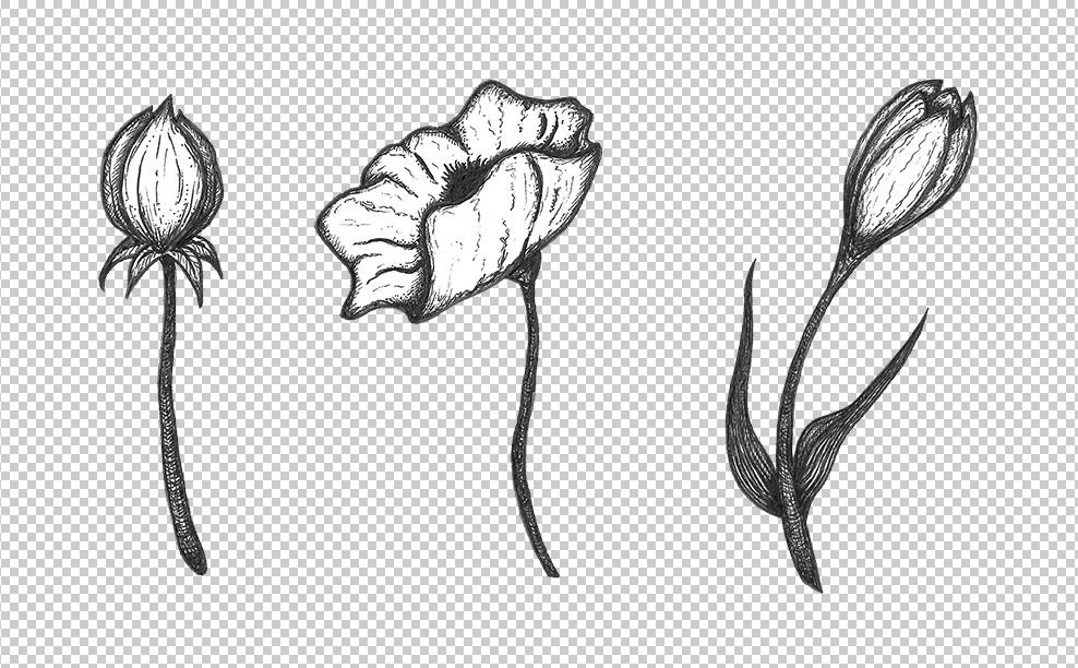 flowers pen sketch