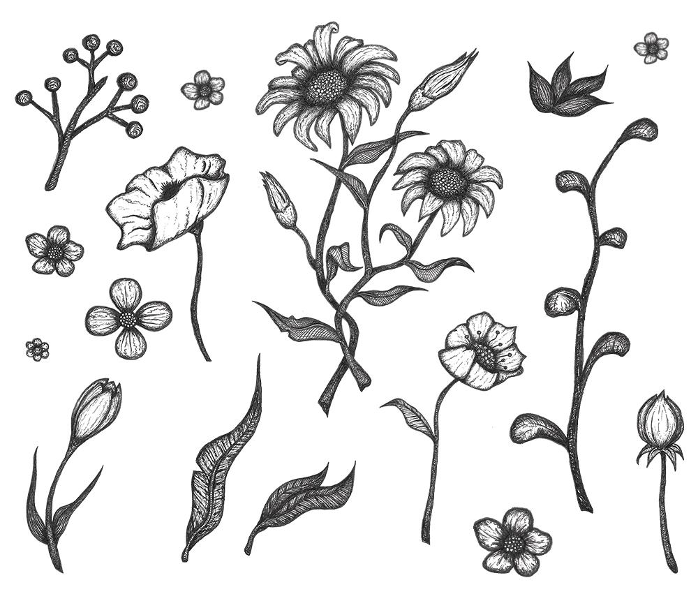 Free Flower Drawings