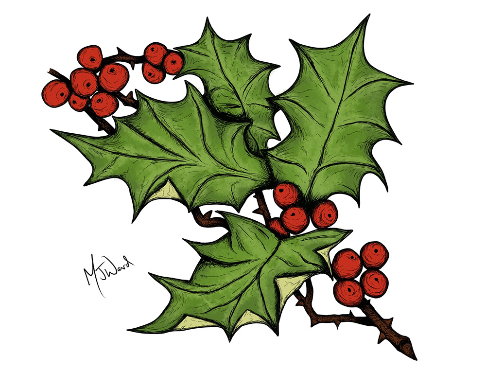 Christmas Holly Drawing